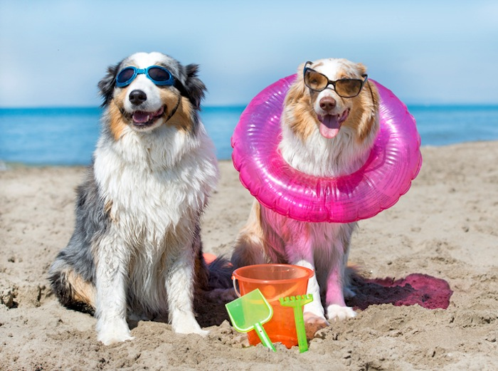 Super Deals on Dog Friendly Beach Rentals in Holden Beach