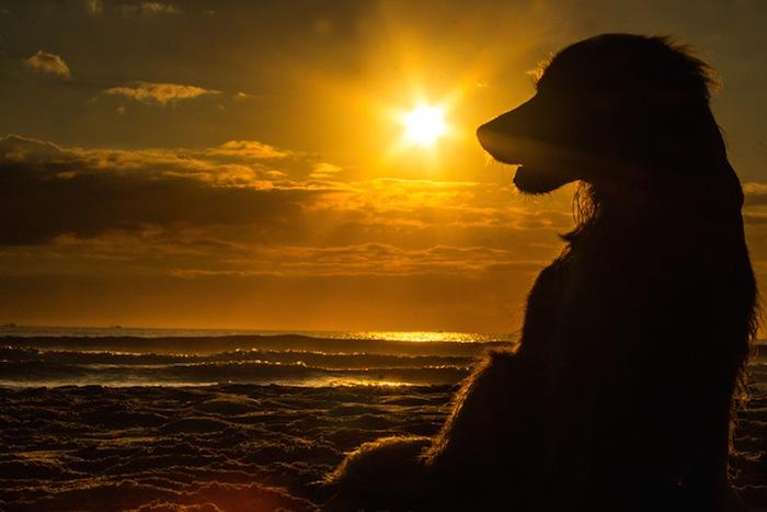Super Deals on Dog Friendly Beach Rentals in Holden Beach