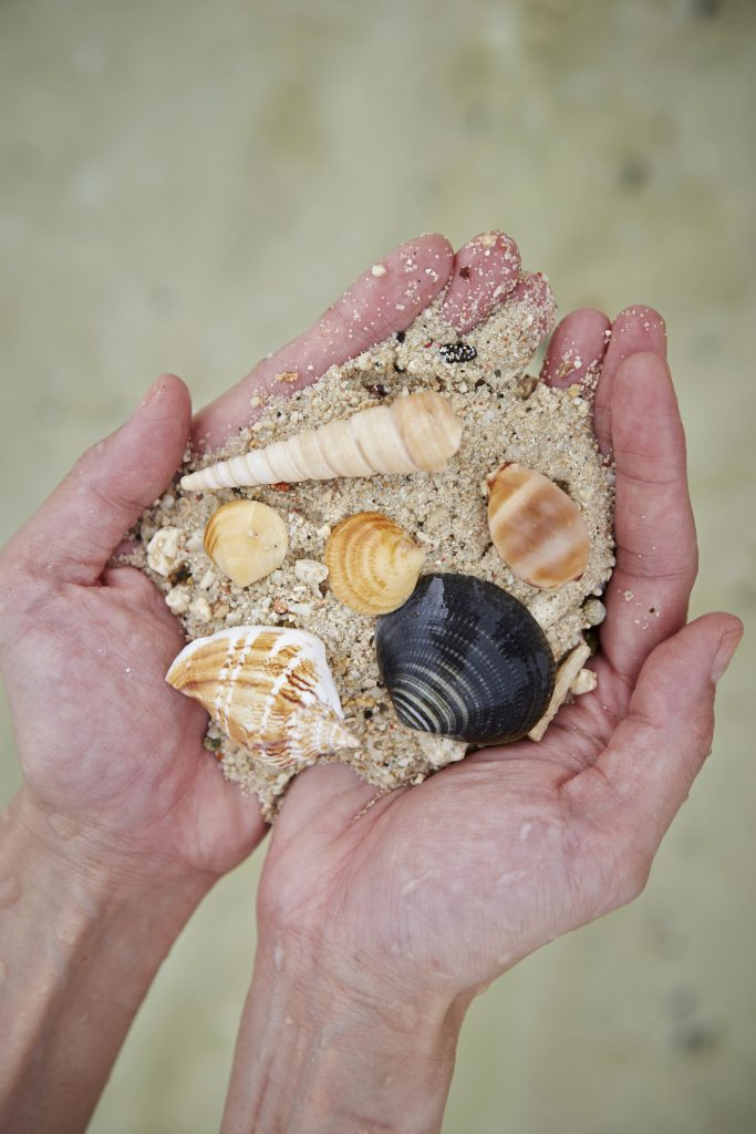 Find Beach Treasure on your Next Family Vacation to Holden Beach